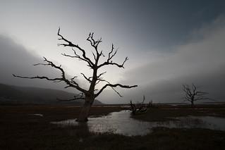Rain & Mist Trees, Porlock Marsh