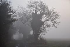 Essex Barling Magna (daveknight1946) Tags: fog tree essex scene winter landscape barling greatphotographers