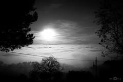 (--marcello--) Tags: fog blackandwhite nebbia trees sun sky