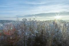 Sonnenaufgang über Winterwald