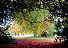 Autumn window (Brimack) Tags: park autumn liverpool calderstones