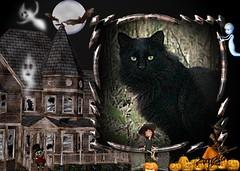 Long-Haired Black Cat Loonapix Hallowe'en 004 (Chrisser) Tags: cats ontario canada halloween nature animal animals cat ourcatcompanions crazyaboutcats kissablekat kissablekats bestofcats specialholidays kissablekitties kissablekitty loonapix canoneosrebelt1i canonef75300mmf456iiiusmlens