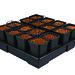 AW416V2 - 16 pot square XXL - 11L © Nutriculture