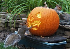 We are admiring our work (MissyPenny) Tags: autumn orange pumpkin outdoors artwork squirrel pennsylvania pumpkincarving pumpkinface southeasternpa