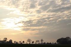 Anklamer Strae (Deichvoigt) Tags: road street sundown herbst sonne bume greifswald gegenlicht mecklenburgvorpommern strase elisenhain