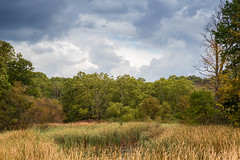 Looking over the marsh from the bridge at Cherry Hill Gate (hey its k) Tags: trees fall landscape colours hfg img0390 canon6d cherryhillrbg