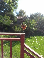 October 5, 2014 - A spider weaves its web in a Thornton garden. (LE Worley)