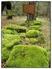 "La forêt pétrifiée • <a style=""font-size:0.8em;"" href=""http://www.flickr.com/photos/79121457@N02/15273403047/"" target=""_blank"">View on Flickr</a>"