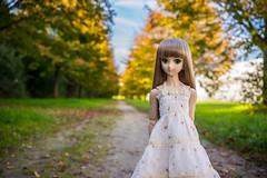 Ein Spaziergang im Herbst (Mikuhist) Tags: autumn sky tree fall grass yellow zeiss 35mm germany landscape bokeh sony dream bjd fe dd dollfie volks za 32 f28 a7 7 jfigure  ilce7