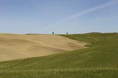 Screensaver (rferrarim) Tags: blue trees sky italy cloud green field grass rural golden countryside europa europe italia day screensaver wheat hill sunny tuscany toscana sunnyday