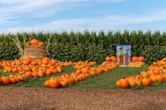 Scenes of Fall (iteachag) Tags: california autumn fall canon pumpkin pumpkinpatch centralcoast losososca t5i