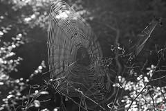 Trampas del bosque (David A.R.) Tags: david canon eos ar vigo fotografo padron araujo pontecesures grupal valga 40d kdds