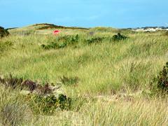 Stop (mahler9) Tags: beach grass sign october capecod massachusetts stopsign herringcove 2014 jaym mahler9