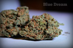 The Cannabis Factory (Outlawzcrew760) Tags: california legalize amazing like follow og greens medicine marijuana popular herb likes legal chronic sativa dank lavendar ganja violator kush medicated indica bluedream prop215 purps