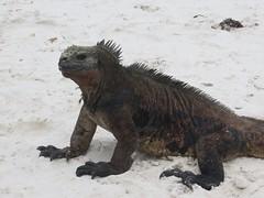 Galápagos - Santa Cruz-4