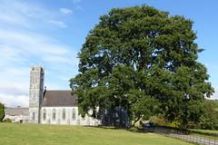Holm Oak at Glencairn (Tom Kennedy1) Tags: lismore holmoak quercusilex hiddenireland glencairnabbey