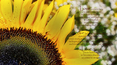 Pouring out my praise!! (J316) Tags: love worship god glory joy holy sunflower salvation scripture rejoice praise 1corinthians13 j316 holygod stayamazed