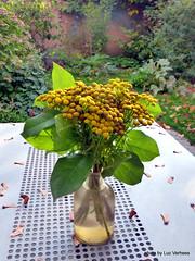 herfstboeketje (Lucsaflex) Tags: flowers autumn garden herfst tansy boerenwormkruid