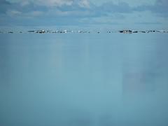 Island Dog #3 (HurrySlowly) Tags: cloud dog water animal coral rock landscape wave lagoon cookislands rarotonga reef muri