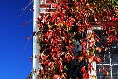 Autumn (Benny2006) Tags: autumn sky house brick fall window colors leaves