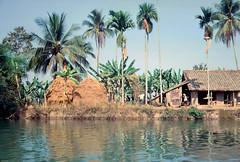 BIEN HOA 1967 (manhhai) Tags: vietnamese waite vietnam 1967 tet bienhoa tetoffensive macv trangbom advisoryteam98 ductu anxuan vuonngo