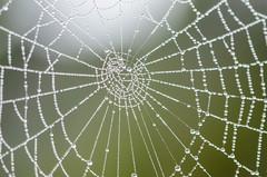 Spinnennetz (Namasnah) Tags: net rain spider drops spinne dortmund regen netz tropfen symmetrie lttringhausen