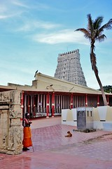 Thiruchendur Murugan temple (seeveeaar) Tags: dog india tree up by temple all coconut framed peacock tamilnadu sadhu ascetic murugan lined gopuram tiruchendur thiruchendur kulasai2014