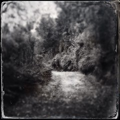 Buaco Forest - 06Sep14, Luso (Portugal) - 03 (]) Tags: blackandwhite bw blur tree portugal square blurry noiretblanc path nb passage arbre chemin flou carr buaco iphone luso mealhada iphoneography hipstamatic dtypeplate tinto1884