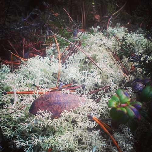 The world beneath your feet 13 #yxy #Yukon #macro #nature