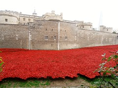 Poppies (MJ_100) Tags: flowers london ceramic memorial poppies ww1 firstworldwar toweroflondon