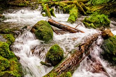 Zigzag Creek (Alan Amati) Tags: water oregon creek river flow stream nw mt northwest forrest or national pacificnorthwest hood flowing wilderness zig zag zigzagriver amati zagzig zigzagcreek alanamati