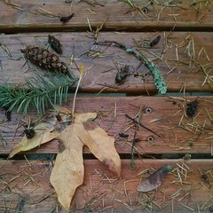 Debris from Last Night's Wind, I need to Sweep the Porch. (Heath & the B.L.T. boys) Tags: autumn leaf lichen pinecone twigs instagram