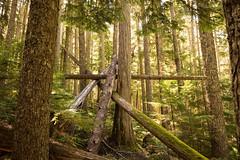 Trigonometry (P.A.B.) Tags: trees light summer canada green triangles whistler britishcolumbia angles collection bark fallen trigonometry garibaldiprovincialpark wedgemountlake nikond800e nikonnikkor2470mmf28afsged