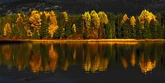 Alpine Autumn II (david schweitzer) Tags: poeexcellence autumn fall gold yellow colours reflections water lake whistler blackcomb altalake alpine mountains canada britishcolumbia davidschweitzer documentaryphotography streetphotography