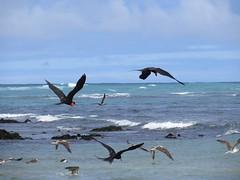 Galápagos - Isabela-110