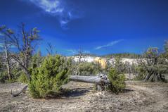 Fallen Tree - Mammoth Hot Springs (Scott Andrew Smith) Tags: september yellowstonenationalpark yellowstone wyoming nationalparks mammothhotsprings 2014 roadtrip2014