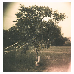 Wind (Analip) Tags: summer tree 120 film analog lomography wind slide diana dianaf 2014