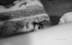 Luaaaaa!!!...where are you? (susodediego ) Tags: bw cat chat gato katze soe autofocus la greatphotographers thegalaxy frameit simplysuperb gnneniyisi oltusfotos hellopussycat nikond7000 rememberthatmomentlevel1 magicmomentsinyourlife rememberthatmomentlevel2 rememberthatmomentlevel3 sigma35mmf14dghsm vpul01 infinitexposure
