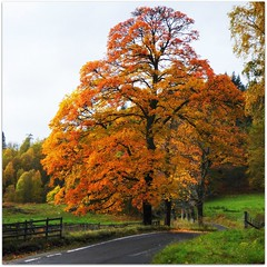 The Tummel Bridge Road (eric robb niven) Tags: bridge autumn scotland dundee perthshire pitlochry tummel lochtummel ericrobbniven lumixfz72