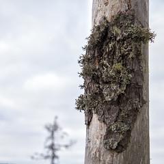 (sami kuosmanen) Tags: light nature up suomi finland close luonto valo lhikuva