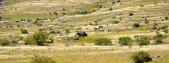 Causse Mjean-Causse noir (sudfrance30) Tags: gard panoramique languedocroussillon lozre causses caussemjean caussenoir chevauxdeprzewalski grandcausse sudfrance30