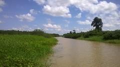 Kaw 16 (Manowar973) Tags: marais kaw guyane roura