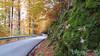 FORESTA DEL CANSIGLIO. (FRANCO600D) Tags: cansiglio montepizzoc strada autunno muschio veneto bellitalia italia italie italy italien fregona smartphone samsung note4 franco600d foresta piandelcansiglio