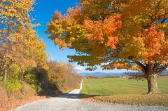 Foliage View (SueZinVT) Tags: foliage trees vermont fall autumn dirtroads path
