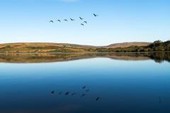 Canada Geese over Stocks reservoir (Glass-Eye Photography) Tags: bowland england lake lancashire landscape nikon reservoir stocks water