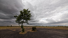 Desolation (Guillaume DELEBARRE (Guigui-Lille)) Tags: tree clouds nuages dsolation canoneos6d sigma1224mmf4556iidghsm uwa ultragrandangle ultrawideangle lens terril loos loosengohelle france pasdecalais