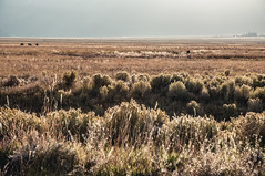 American prairie (Ettore Trevisiol) Tags: ettore trevisiol nikon d300 nikkor 18 70