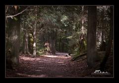 Coquitlam river trail (the_coprolite) Tags: coquitlam portcoquitlam bc britishcolumbia hoycreek lafargelake canada nikon d750 105mm sigma 150600mm