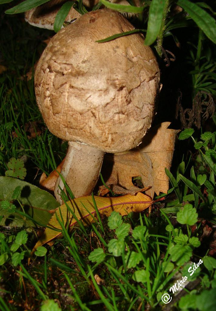 """Águas Frias (Chaves) - ... cogumelo (""""roca""""?) ..."""