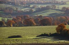 Le bocage en automne (martine_ferron) Tags: champ arbre haie bocage mayenne automne
